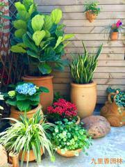 160;广州植物租摆:作为盆花在夏季怎么管理呢