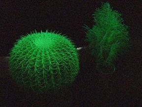 夜晚会发光的植物―植物荧光诱导技术