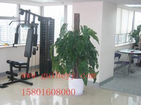北京绿植租摆服务