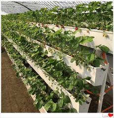 A型架式蔬菜种植槽,立体栽培槽厂家年终促销