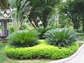 承包佛山市居住小区、别墅庭院花卉养护和草坪绿地保养