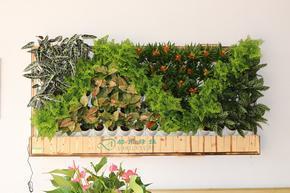 都市绿缘富氧智能绿植壁挂