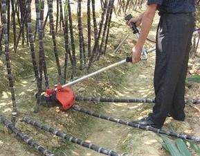 2009新型小型甘蔗收割机