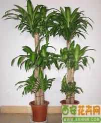 �G植花卉