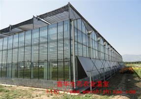 玻璃温室-山东玻璃温室建造