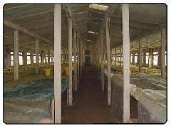 农村养殖户新建鸡舍大棚板材
