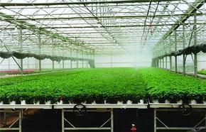 生产设计农用大棚骨架+连栋大棚骨架,厂家直销