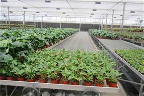 温室苗床移动苗床相比固定苗床的作用优势
