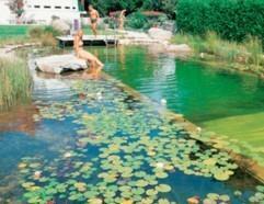 KOIN生态泳池