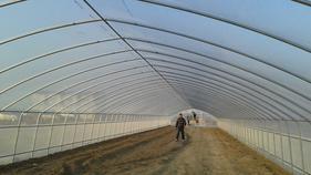 网棚温室,防虫温室