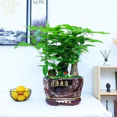 武汉绿植同城配送基地花卉盆栽租赁销售,武汉办公室花卉租摆