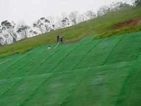 三维植被网垫最新报价