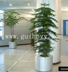 绿植租摆|绿植租赁|北京绿植租摆|服务—北京桂合园艺