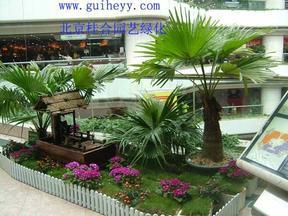花卉租摆|北京花卉租摆|花卉租赁|服务--北京桂合园艺公司