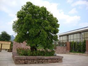 红斑岩大花坛GCB610