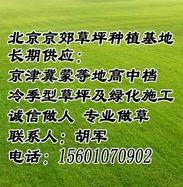 涿州草坪厂家 涿州草坪价格 涿州草坪批发 涿州草坪销售 涿州绿化草坪供应