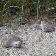 自然石乌龟雕刻GAB524