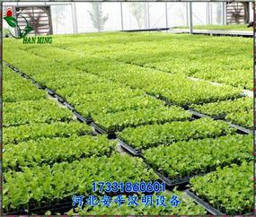 石家庄温室移动苗床_花卉苗床_多肉植物育苗床-安平汉明设备