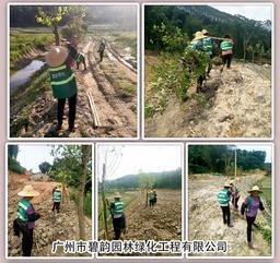 增城区二龙山口旅游区路边种植绿化树