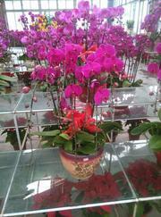 广州花木租赁中心分享室内植物装饰要点有哪些