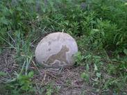 石雕工艺/十二生肖石雕工艺 GAB450