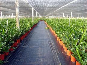 防草布又称抑草席或园艺地布一平米价格