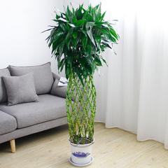 供应武汉室内租摆花卉绿植水生植物,室内花卉定制设计组合盆栽