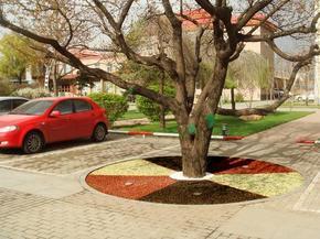海绵城市生态透水树池、生态保水透气型树池、透水混凝土树池