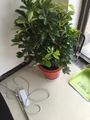 绿植租摆、花卉租赁、花卉租赁