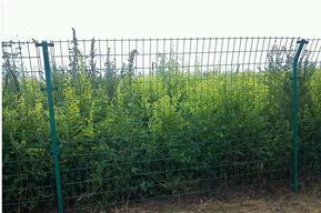 供应电站外围围栏网3.5双边丝弯头护栏网龙泰百川栅栏厂钢丝围栏网厂家