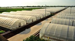 豪达瑞科造温室大棚