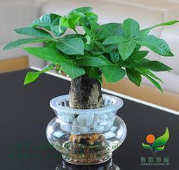 办公室室内植物 艺术造景