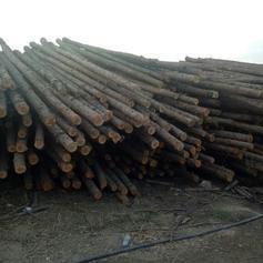 厂家生产防腐油木杆电线杆油炸杆通信电杆