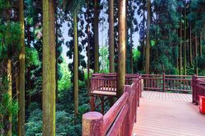 景观阶梯仿木栈道