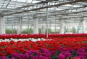晋城花卉种植用玻璃温室大棚